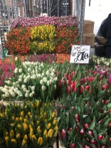Tulips for days!